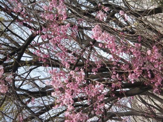 2008-04-05-03.jpg