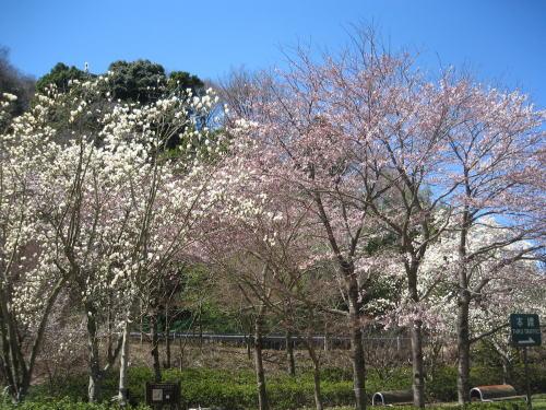 2008-fuji08.jpg