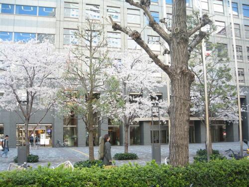 2008-fuji00.jpg
