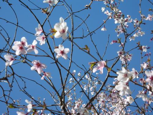 2008-fuji11.jpg